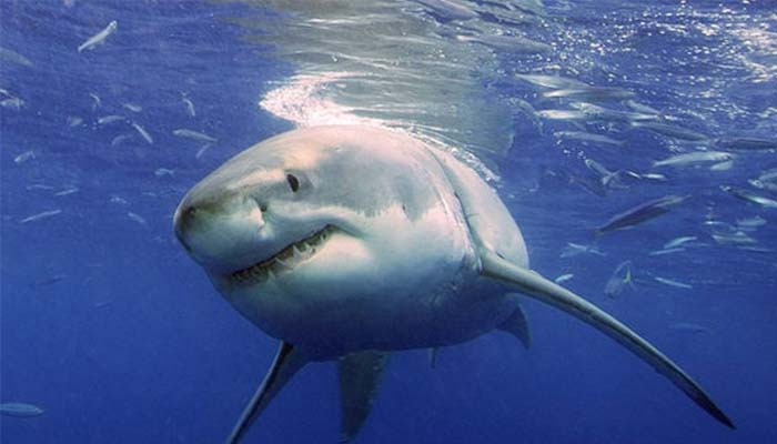 shark pulls woman overboard by biting finger in australia